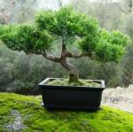 TREE's Foto
